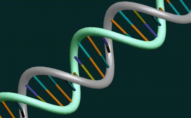 Sequenziato il genoma delle fragole selvatiche