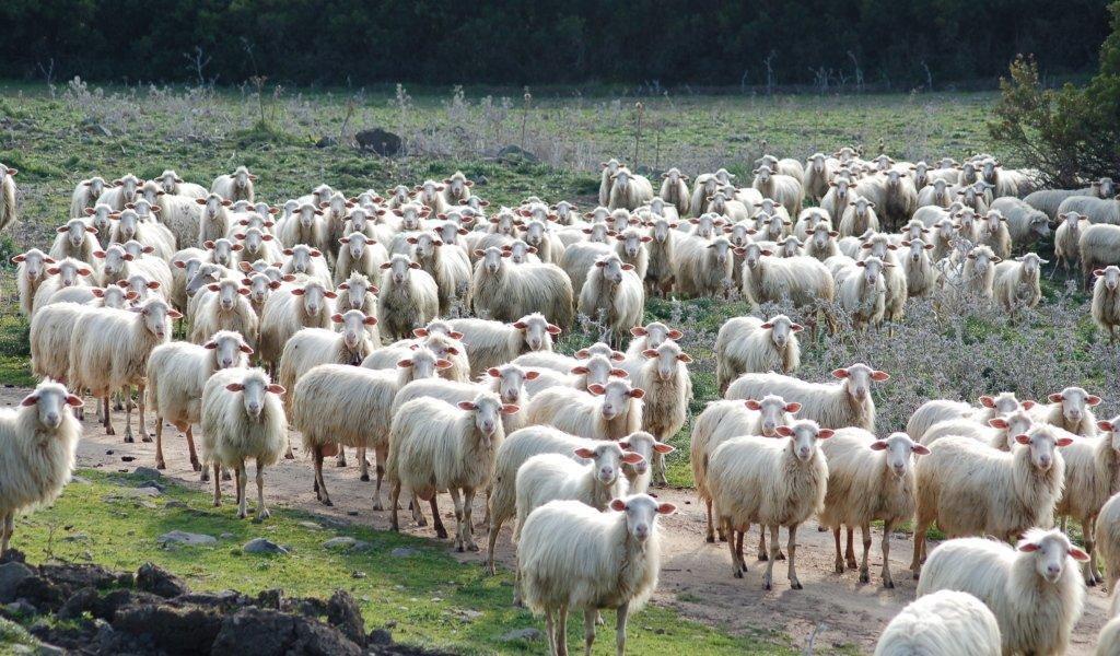 Il 2011 agricolo si apre con il problema sardo