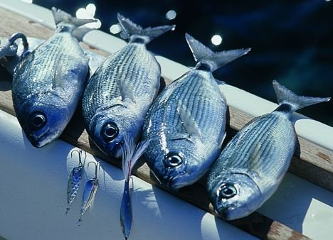215mila chili di prodotto ittico sequestrate