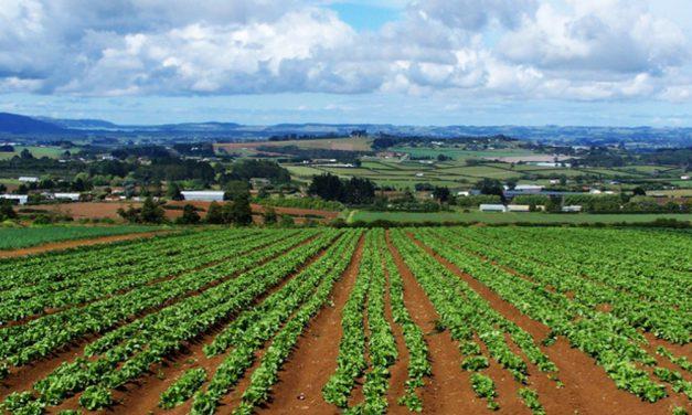 DISEGNO DI LEGGE IN VENETO PER METTERE FUORILEGGE GLI OGM