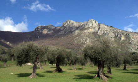A RISCHIO ESTINZIONE I PRODOTTI TIPICI ITALIANI: COLPA DEL CLIMA