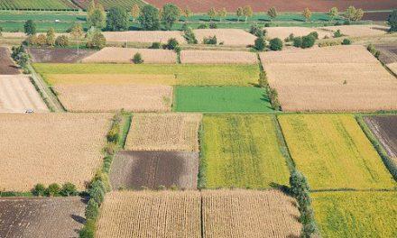 L'AGRICOLTURA VENETA HA RETTO L'IMPATTO DEL COVID
