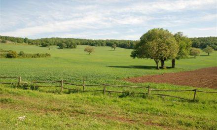TRUFFA ALL'EUROPA: SCOPERTI DUE AGRICOLTORI CAMPANI