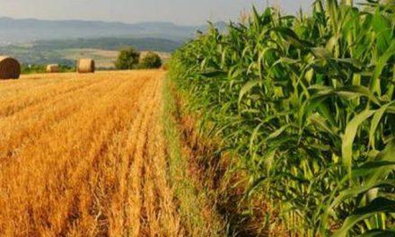 OGM IN ITALIA: DIVENTA PERMANENTE IL DIVIETO DELLA COLTIVAZIONE