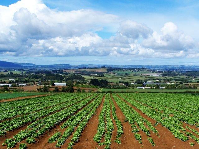 COME USARE I 18 MILIARDI UE PER L'AGROALIMENTARE?