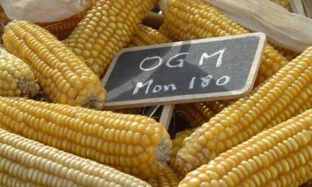 È BATTAGLIA SUGLI OGM TRA CONSUMATORI E MULTINAZIONALI