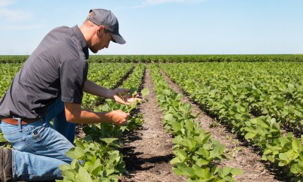 IL BILANCIO 2020 PREVEDE PIÙ FONDI ALL'AGRICOLTURA