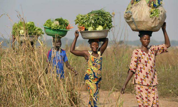 Avanza a grandi passi l'agricoltura in Africa