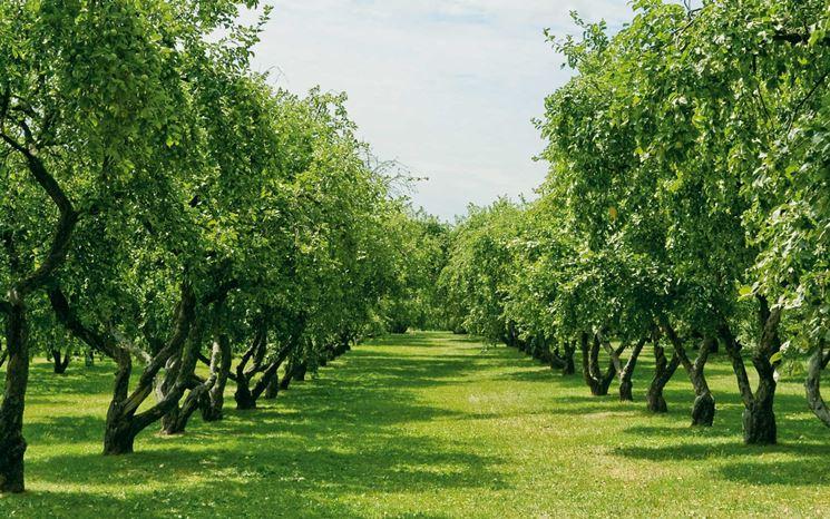 CONTRIBUTI REGIONALI A SOSTEGNO DELL'AGRICOLTURA