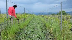 L'AGRICOLTURA RIGENERATIVA: UN FUTURO GIÀ PRESENTE